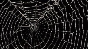 _47245971_spiderweb_spl